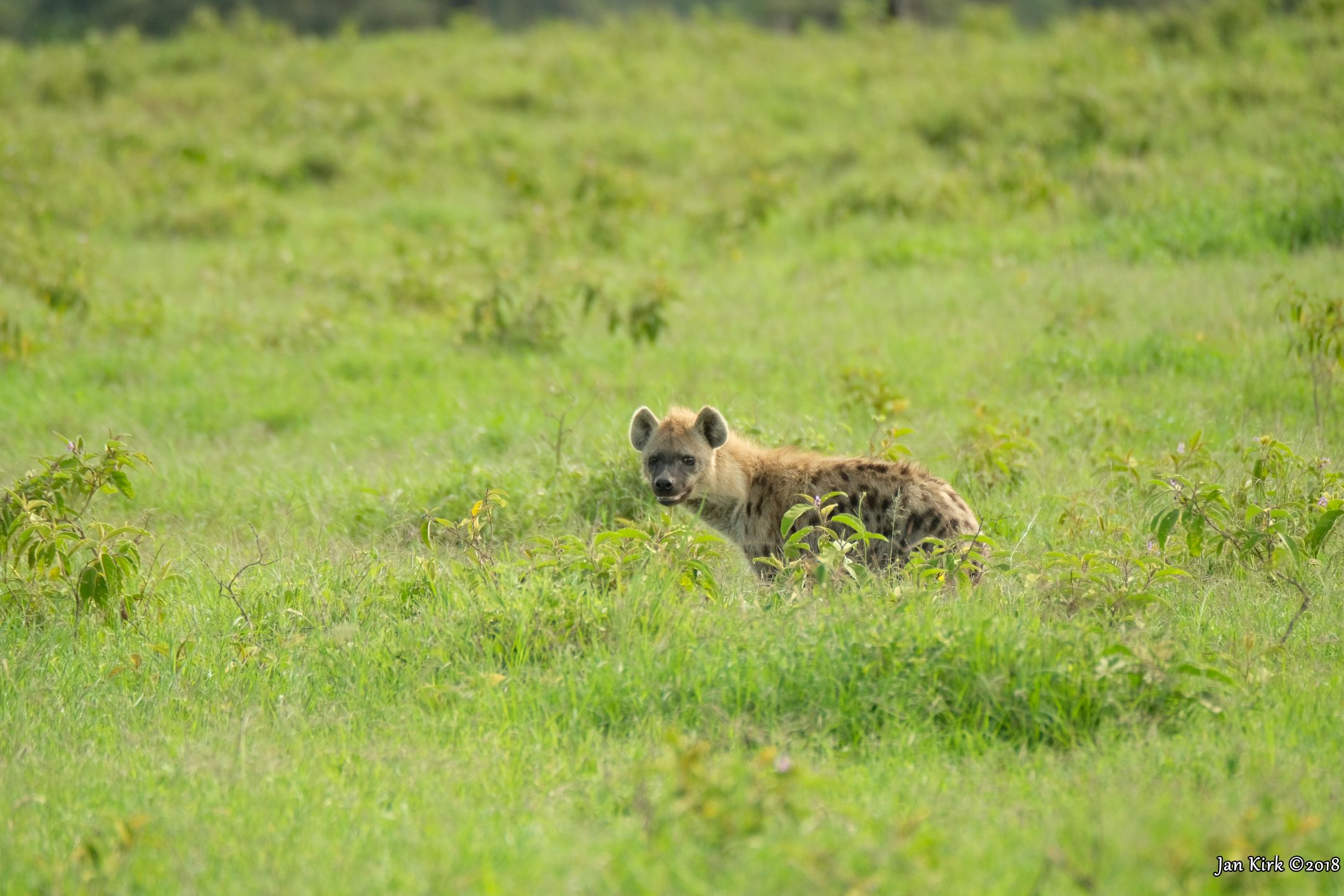 Masai Mara - Others