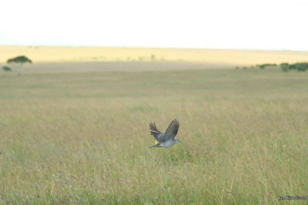 Masai Mara, a few more beginners BIF's